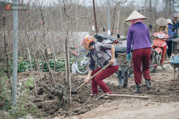 Đào Nhật Tân tấp nập xuống phố, người dân thích thú mua thưởng thức không khí Tết sớm - Ảnh 12.