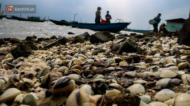 Ảnh: Hàng tấn ngao chết trắng bờ biển, người nông dân Hà Tĩnh rơi vào cảnh khốn khổ - Ảnh 4.