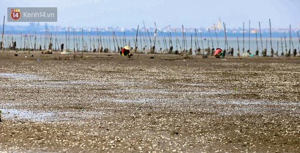 Ảnh: Hàng tấn ngao chết trắng bờ biển, người nông dân Hà Tĩnh rơi vào cảnh khốn khổ - Ảnh 5.