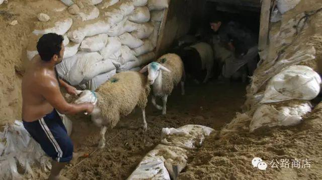 Tại Trung Đông, gà rán KFC cũng trở thành mặt hàng để người ta đánh đổi cả tính mạng để buôn lậu - Ảnh 9.