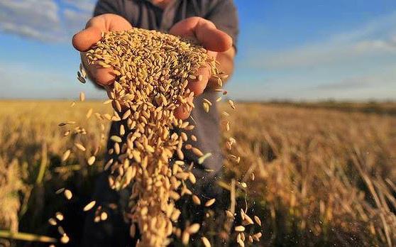 An ninh lương thực thế giới có thực sự đáng báo động?