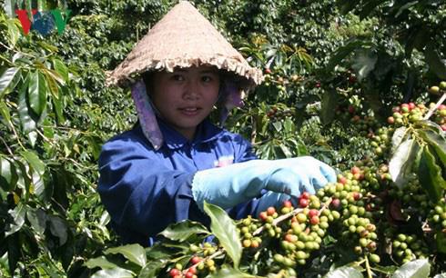 Thị trường giảm mạnh do Covid-19, giá cà phê thấp nhất 10 năm trở lại đây - Ảnh 1.