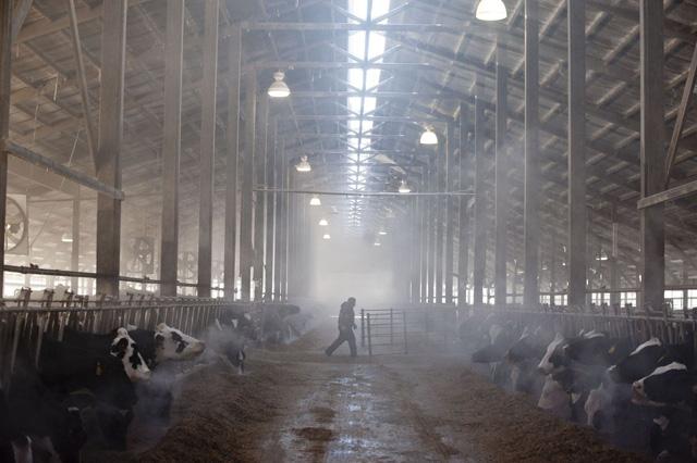Hàng trăm công nhân sản xuất thịt tại Mỹ dương tính với virus corona - Ảnh 2.