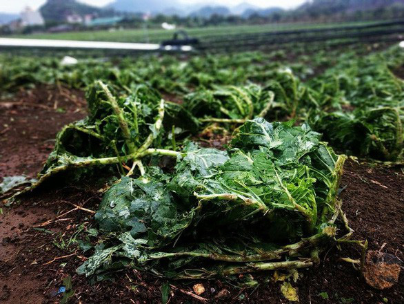 Mưa đá, dông lốc thổi bay gần 34 tỷ đồng ở Lai Châu, Sơn La - Ảnh 1.