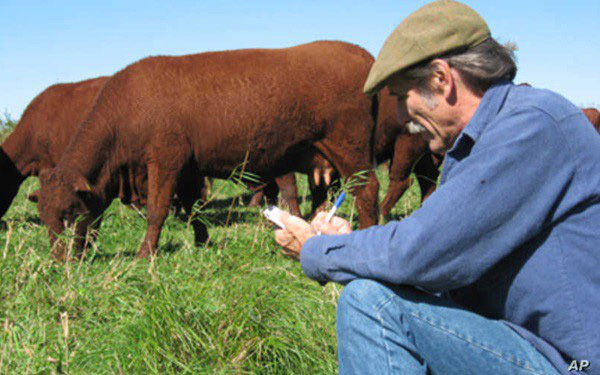 Nông dân Mỹ tiêu hủy hàng ngàn gia súc, hàng triệu gia cầm do Covid-19 - Ảnh 1.