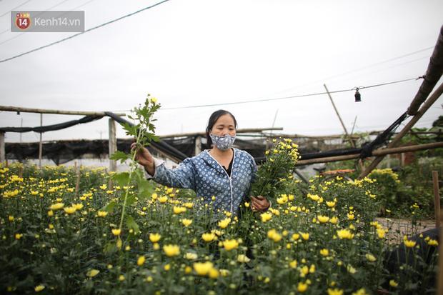 """""""Thủ phủ"""" hoa tại Hà Nội nở rộ giữa dịch COVID-19: Tưởng thắng vụ mà thành bại, hoa cười nhưng người khóc - Ảnh 1."""