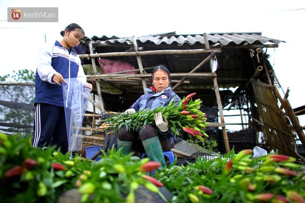 """""""Thủ phủ"""" hoa tại Hà Nội nở rộ giữa dịch COVID-19: Tưởng thắng vụ mà thành bại, hoa cười nhưng người khóc - Ảnh 13."""