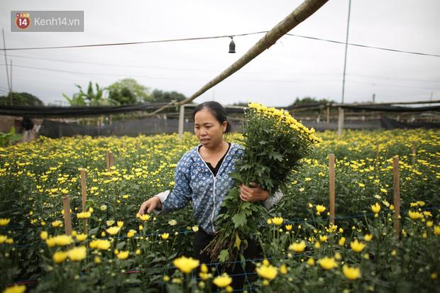"""""""Thủ phủ"""" hoa tại Hà Nội nở rộ giữa dịch COVID-19: Tưởng thắng vụ mà thành bại, hoa cười nhưng người khóc - Ảnh 5."""