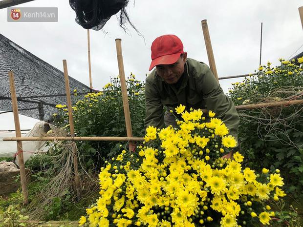 """""""Thủ phủ"""" hoa tại Hà Nội nở rộ giữa dịch COVID-19: Tưởng thắng vụ mà thành bại, hoa cười nhưng người khóc - Ảnh 6."""
