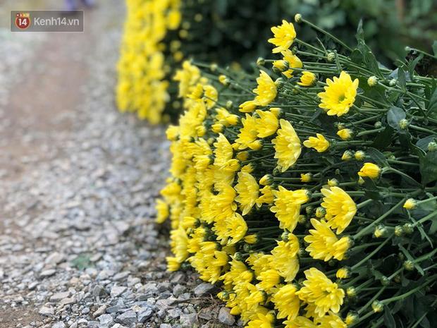 """""""Thủ phủ"""" hoa tại Hà Nội nở rộ giữa dịch COVID-19: Tưởng thắng vụ mà thành bại, hoa cười nhưng người khóc - Ảnh 7."""