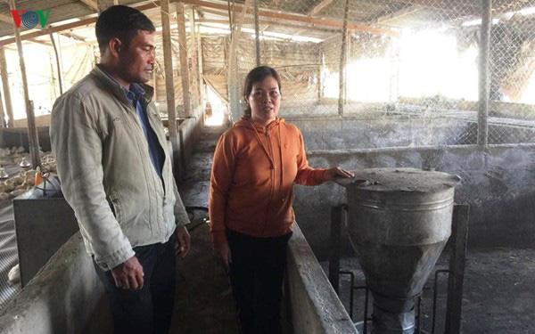Lâm Đồng người chăn nuôi lợn gặp khó khi tái đàn sau dịch - Ảnh 1.