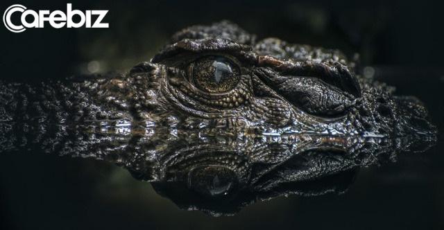 Cuộc đi săn mồi của cá sấu và bài học khởi nghiệp: Dùng thuật ẩn mình để tìm thị trường ngách, tấn công chớp nhoáng chinh phục thị trường - Ảnh 1.