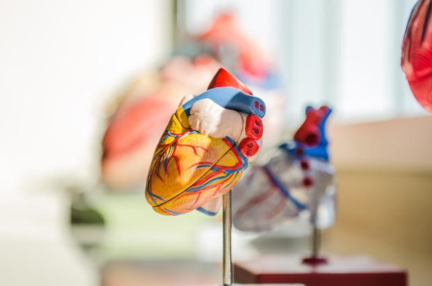 Những bí mật cực thú vị về trái tim và dòng máu mà suốt bao năm nay bạn vẫn chưa biết đến - Ảnh 1.
