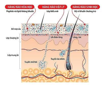 Bác sĩ BV Đại học Y Dược tiết lộ 1 cửa ngõ giúp vi khuẩn tấn công phổi rất ít người biết - Ảnh 2.