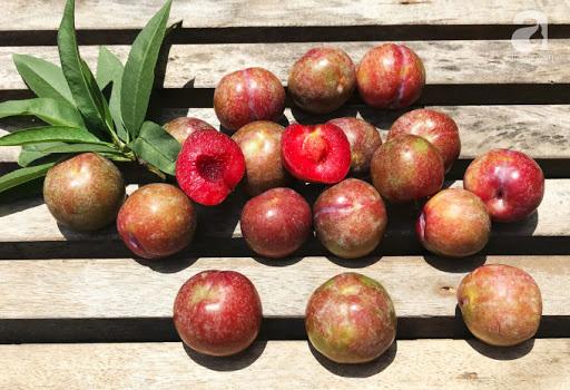 Mận là loại trái cây cực tốt nhưng có những người tốt nhất không nên ăn, đặc biệt là 5 đối tượng này - Ảnh 4.