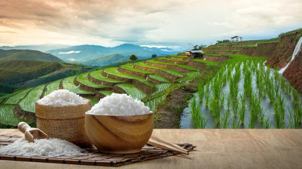 Lúa gạo ăn không hết để mốc hỏng, cả gia đình người đàn ông vẫn chết vì đói: Lý do cảnh tỉnh nhiều người! - Ảnh 1.