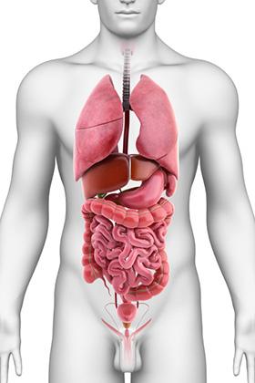 Đông y mách bạn cách dưỡng ngũ tạng: Bệnh chỉ là ngọn, phải phòng chữa từ gốc - Ảnh 1.
