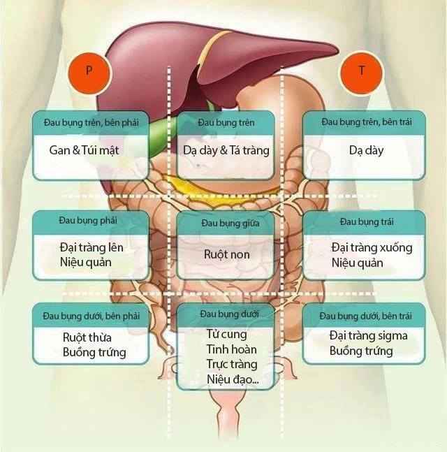 Đau bụng không nhất thiết là vấn đề về đường tiêu hóa: Nếu bị đau ở 8 vị trí này trên bụng, bạn phải cảnh giác ngay  - Ảnh 1.