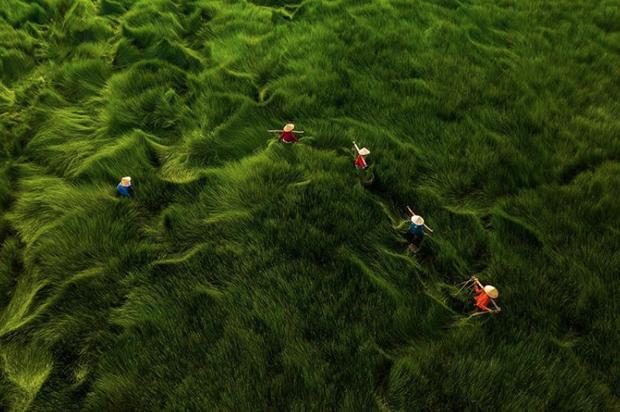 """Bộ ảnh đồng cỏ Việt Nam """"lượn sóng"""" đang gây bão mạng quốc tế, nhưng cả ngàn người nước ngoài lại bị nhầm lẫn ở một điểm này - Ảnh 5."""