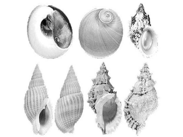 Đi tắm biển, ăn đồ biển, cần tránh xa những loại hải sản và sinh vật biển cực độc có thể gây chết người này - Ảnh 4.
