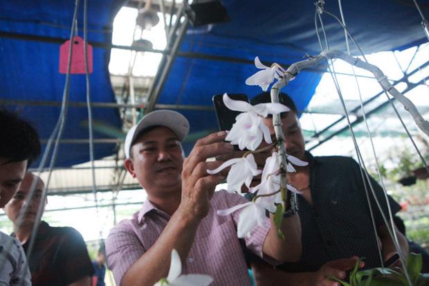 Đại gia Hà Nội chi mạnh 5 tỷ đồng mua giò lan đột biến nhìn như... ngọn rau muống - Ảnh 10.