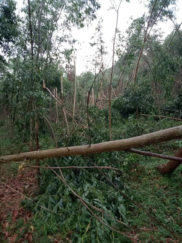 Hàng chục ngôi nhà bị tốc mái sau cơn lốc xoáy ở Hà Tĩnh - Ảnh 3.