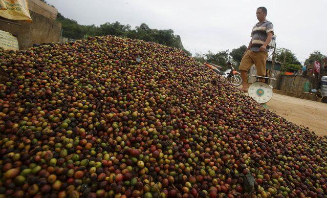 Nguồn sống của hàng triệu nông dân Việt Nam gặp khó, làm sao tìm cơ trong nguy? - Ảnh 1.
