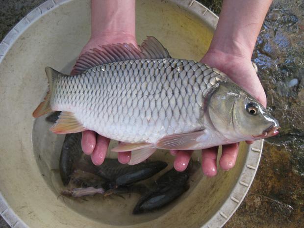 Cá có đầy chất dinh dưỡng nhưng 4 bộ phận này của cá thì nên vứt bỏ chứ đừng dại mà ăn - Ảnh 5.