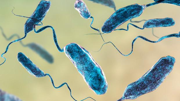 Ăn hàu sống chưa làm sạch: một người đàn ông đã tử vong do nhiễm vi khuẩn ký sinh trong loài hải sản này - Ảnh 2.
