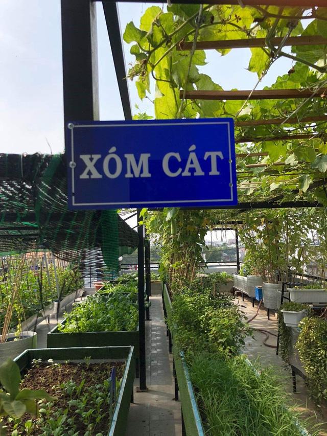 Đầm sen trên sân thượng 300m2 giữa lòng Sài Gòn: Ông chủ tự tay làm từ A-Z, chi phí chỉ 50 triệu  - Ảnh 24.