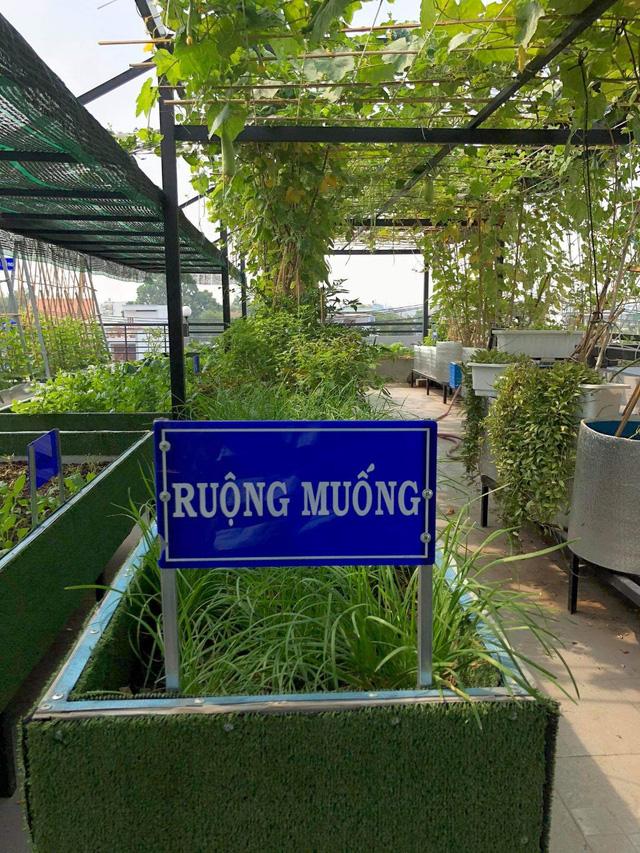 Đầm sen trên sân thượng 300m2 giữa lòng Sài Gòn: Ông chủ tự tay làm từ A-Z, chi phí chỉ 50 triệu  - Ảnh 25.