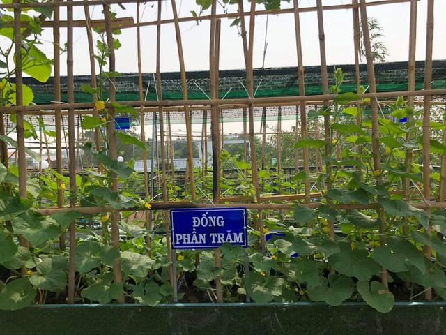 Đầm sen trên sân thượng 300m2 giữa lòng Sài Gòn: Ông chủ tự tay làm từ A-Z, chi phí chỉ 50 triệu  - Ảnh 26.