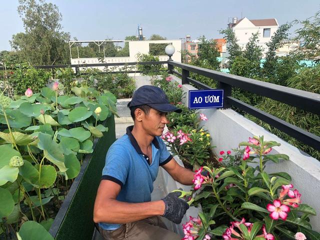Đầm sen trên sân thượng 300m2 giữa lòng Sài Gòn: Ông chủ tự tay làm từ A-Z, chi phí chỉ 50 triệu  - Ảnh 27.