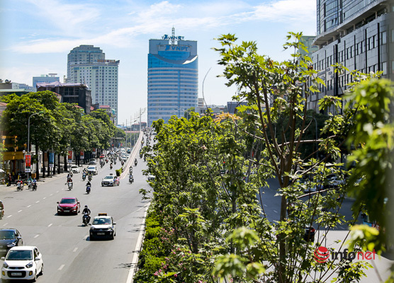 Hà Nội: Hàng phong trổ lá xanh tươi giữa hè nắng gắt - Ảnh 1.