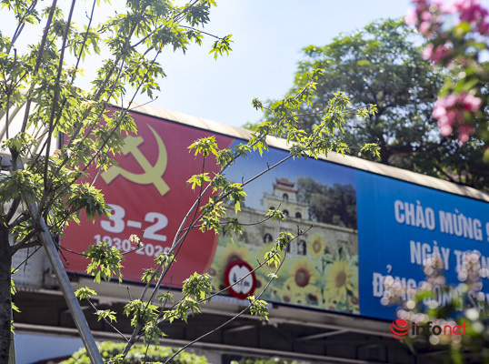 Hà Nội: Hàng phong trổ lá xanh tươi giữa hè nắng gắt - Ảnh 6.