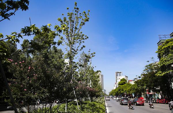 Hà Nội: Hàng phong trổ lá xanh tươi giữa hè nắng gắt - Ảnh 9.