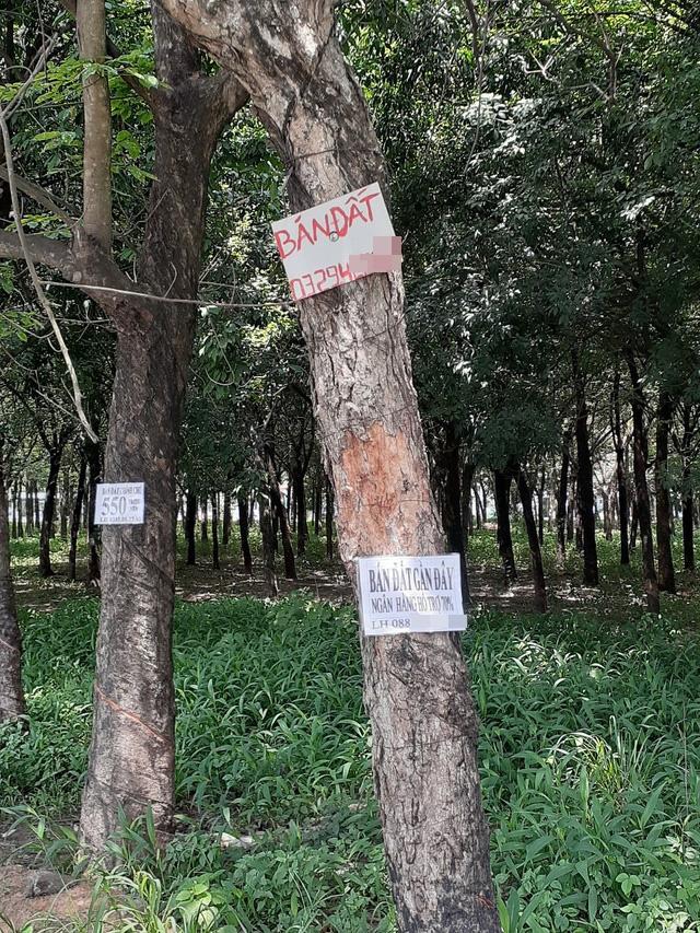 Hoa mắt với cung đường tờ dán, tờ rơi rao bán BĐS tại Long Thành (Đồng Nai) - Ảnh 3.