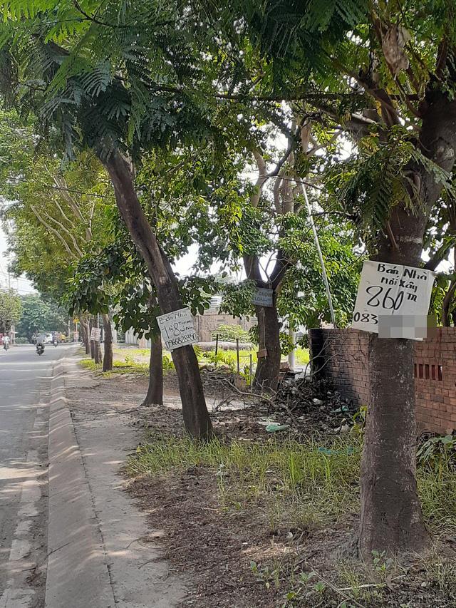 Hoa mắt với cung đường tờ dán, tờ rơi rao bán BĐS tại Long Thành (Đồng Nai) - Ảnh 10.