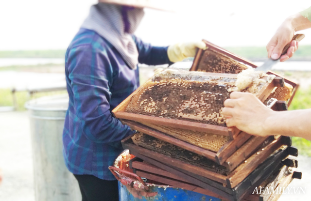 Tạm xa Hồ Tây một hôm, về Ninh Bình thăm bác nông dân thu nhập khủng nhờ nuôi ong lấy mật từ loài hoa ít ai ngờ tới  - Ảnh 4.