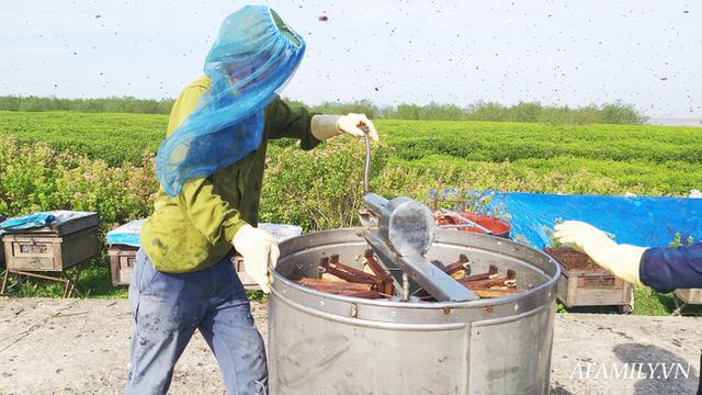 Tạm xa Hồ Tây một hôm, về Ninh Bình thăm bác nông dân thu nhập khủng nhờ nuôi ong lấy mật từ loài hoa ít ai ngờ tới  - Ảnh 7.