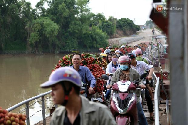 """Vải thiều Bắc Giang vào vụ, dân gồng mình chở hàng tạ vải chòng chành qua chiếc cầu phao """"tử thần"""": """"Ngã lộn xuống sông là chuyện bình thường"""" - Ảnh 4."""