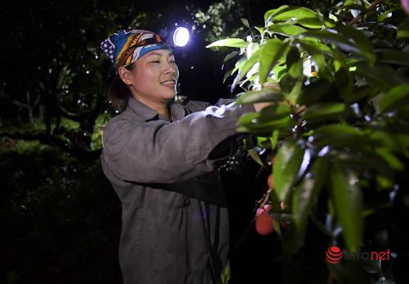 Trúng lớn mùa vải thiều, người dân thắp đèn thu hoạch cả đêm - Ảnh 3.