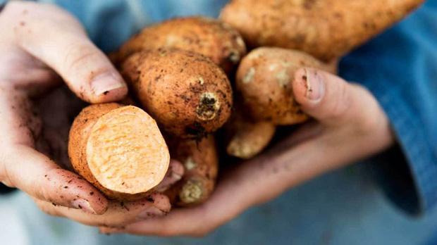 4 loại thực phẩm đừng nên ăn cùng khoai lang nếu không muốn bị đau bụng, đầy hơi, trào ngược dạ dày - Ảnh 1.