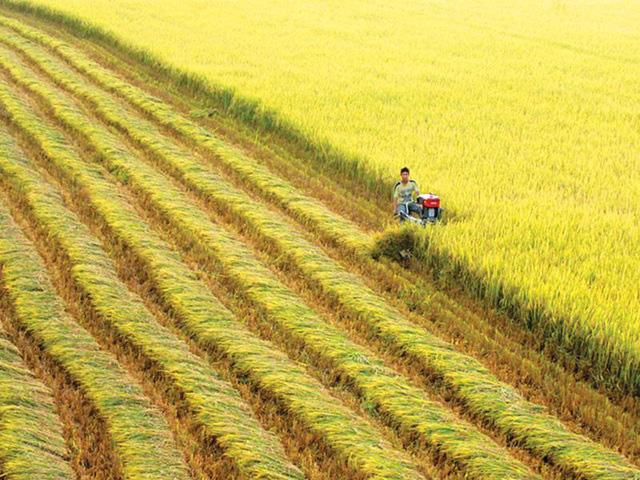Dân số toàn cầu sẽ đạt 9,7 tỷ năm 2050, làm sao nông nghiệp Việt Nam vừa đáp ứng nhu cầu, vừa không gây ô nhiễm? - Ảnh 1.