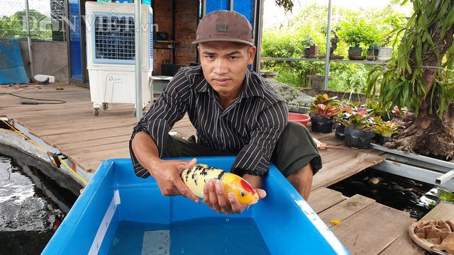 Về quê nuôi cá trồng rau thu tiền tỷ (P2): Nuôi cá Koi ngàn đô dưới ao quê không khó, thuần hóa mới khó! - Ảnh 2.