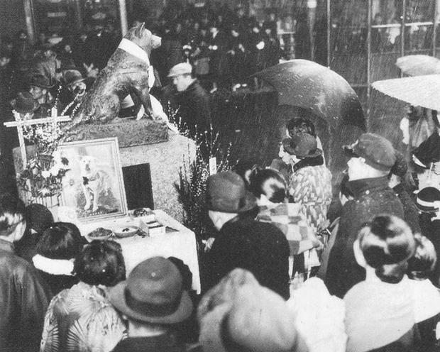 Những bức ảnh hiếm hoi về Hachikō - biểu tượng trung thành của người Nhật khiến người xem cảm tưởng câu chuyện đau lòng ấy đang diễn ra trước mắt - Ảnh 12.
