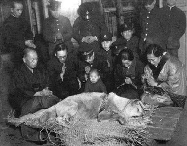 Những bức ảnh hiếm hoi về Hachikō - biểu tượng trung thành của người Nhật khiến người xem cảm tưởng câu chuyện đau lòng ấy đang diễn ra trước mắt - Ảnh 13.