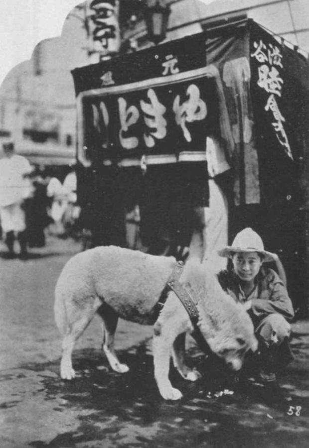 Những bức ảnh hiếm hoi về Hachikō - biểu tượng trung thành của người Nhật khiến người xem cảm tưởng câu chuyện đau lòng ấy đang diễn ra trước mắt - Ảnh 8.