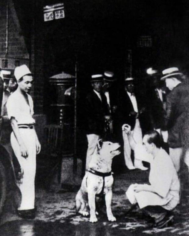 Những bức ảnh hiếm hoi về Hachikō - biểu tượng trung thành của người Nhật khiến người xem cảm tưởng câu chuyện đau lòng ấy đang diễn ra trước mắt - Ảnh 10.