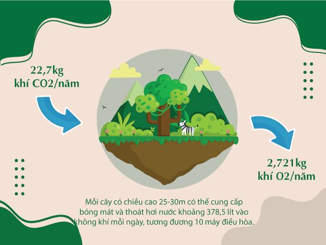 Khi triệu cây xanh là triệu câu chuyện về cảm hứng tích cực cho cuộc sống  - Ảnh 1.
